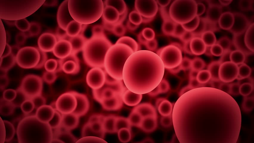 Blood cells images | Big Picture