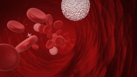 Blood cells traveling in an artery or vein, red blood cells, white blood cells and platelets