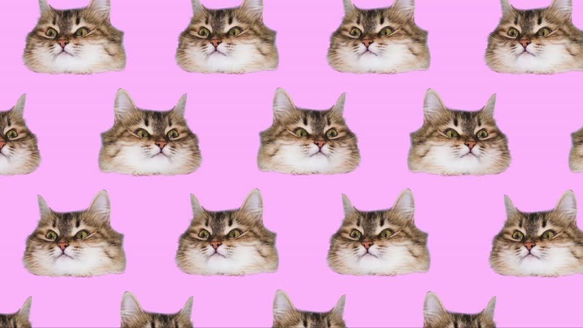 many heads of cats on colorful backgrounds. Minimal design Fun Art.