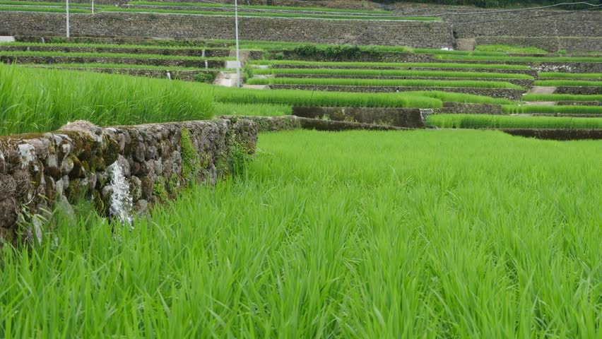 Paddy field is divided by stone walls in the mountains of Nagasaki prefecture, JAPAN. without sounds