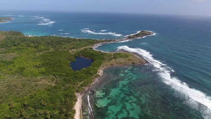 Aerial drone shot in sunny day time. High fly over palm trees mangrove forest and beautiful beach lagoon. Located in martinique.