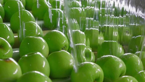 Industrial Farming, Processing and Storage of Apples.Fresh Green Apples on the Conveyor. Washing Fruits
