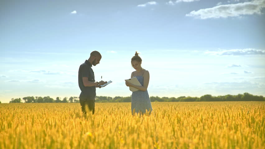 Young man with tablet speaking about wheat harvest with female agronom. Agriculture research. Agro farmer researchers in golden wheat field | Shutterstock HD Video #1006856983