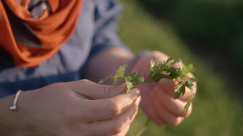 A Farmer Inspects Her Crop Ready For Harvest, In Slow Motion