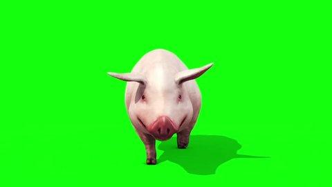 Pig Animal Farm Walkcycle Green Screen Front 3D Renderings Loop Animations