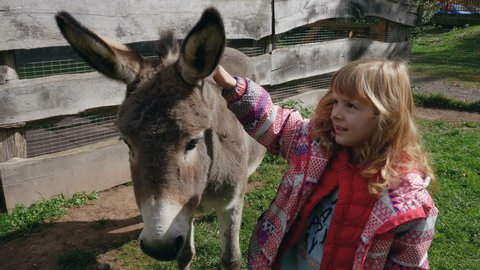 Girl petting a donkey on the snout and behind the ears. Medium shot.