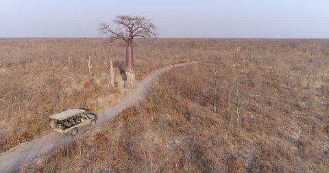 Aerial rear view of a tourist 4x4 game drive vehicle approaching a large Baobab tree on a sand road in the Botswana bushveld