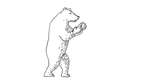 2d Animation motion graphics showing a  grizzly bear boxing, punching and jabbing side view on white screen with alpha matte in  HD high definition.