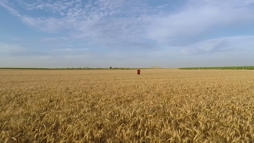 Portrait of senior farmer standing in wheat field. Aerial view. | Shutterstock HD Video #1007312083