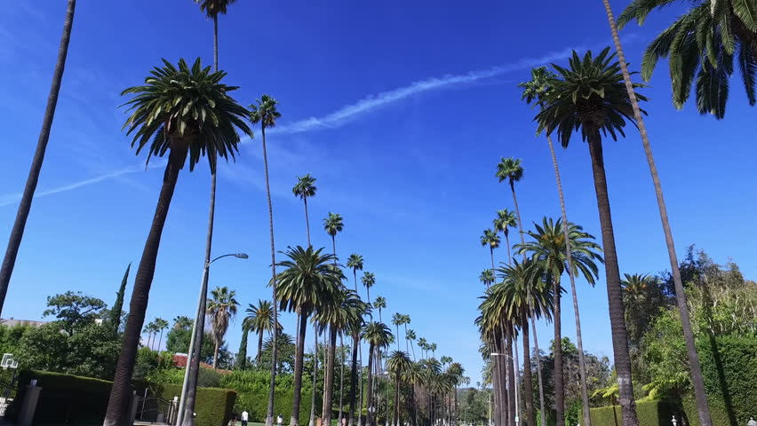 Palm trees on Beverly Hills. Los Angeles, California. Clear summer sky.  | Shutterstock HD Video #1007419213