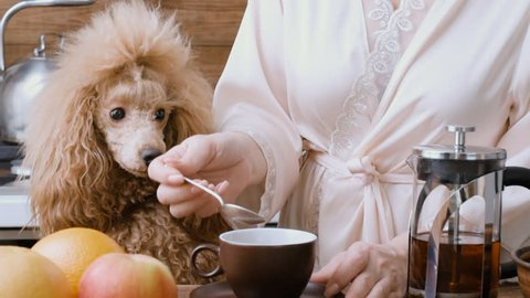 Woman with her dog hewing breakfast .