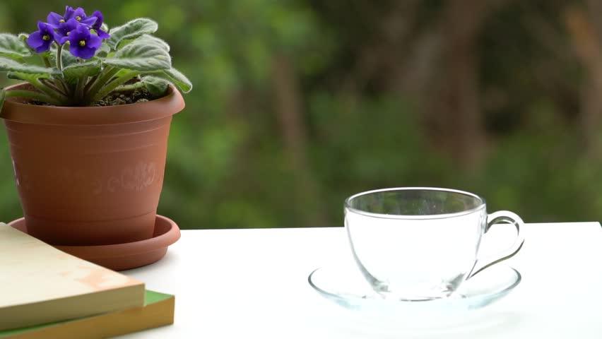 Woman drink coffee and read book near flower pots. | Shutterstock HD Video #1007998543