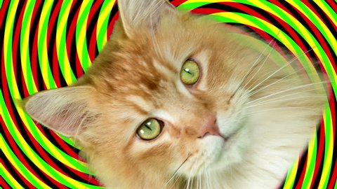 beautiful cool disco cat cutout against spiral hypnotic background and the head spinning in space
