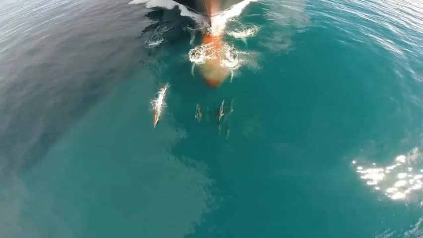 Aerial wide shot of the massive flock of dolphins swimming ahead of ship