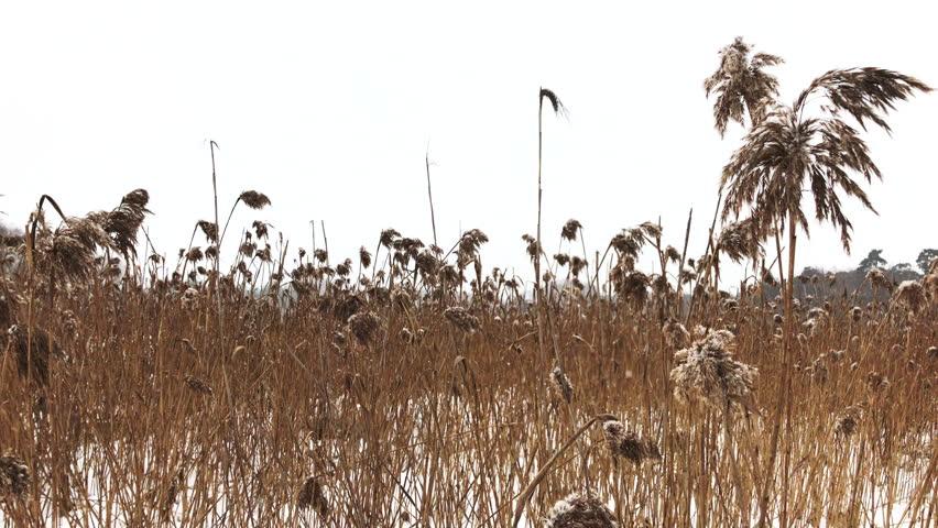 Header of reed