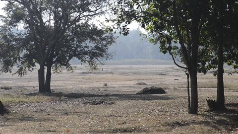 Landscape forest in National Park, India