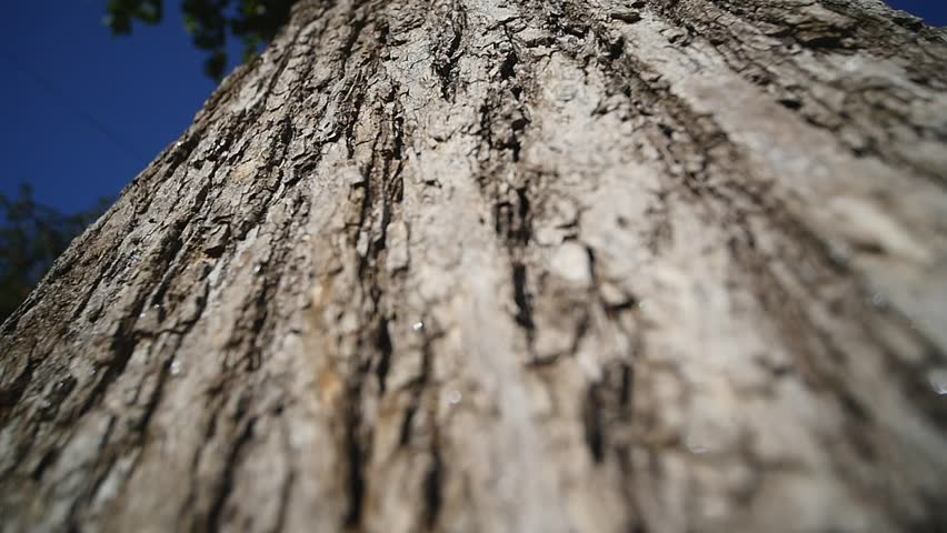 bark of tree. close up