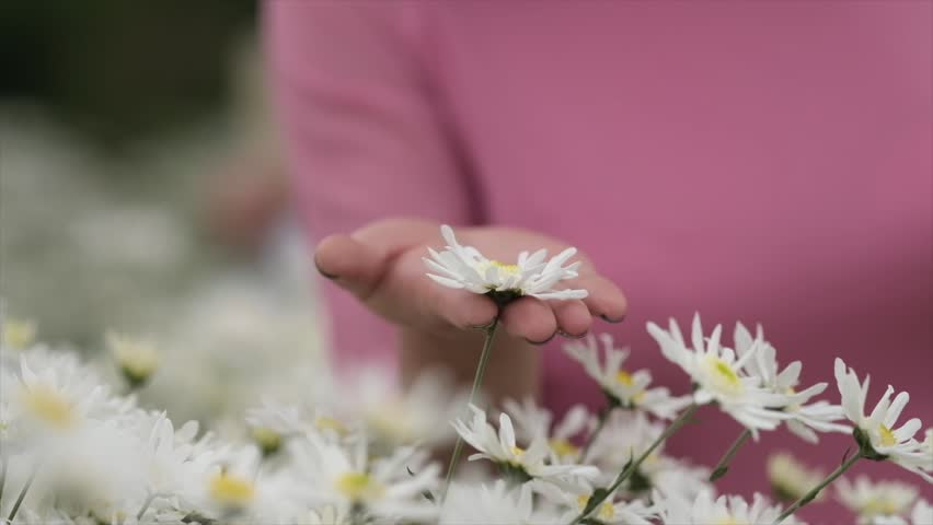 white daisies on a background of a girl wearing a traditional Vietnamese dress