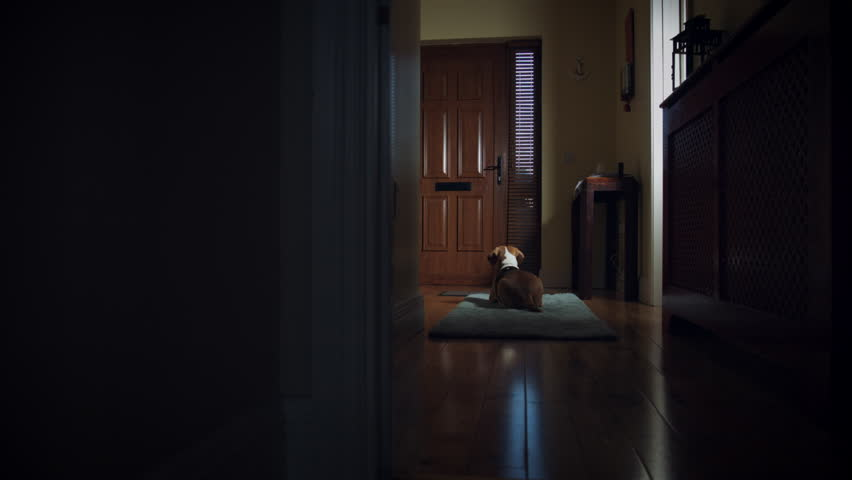 4k Dolly of House Front Door, Dog Waiting for Owner to Come Home