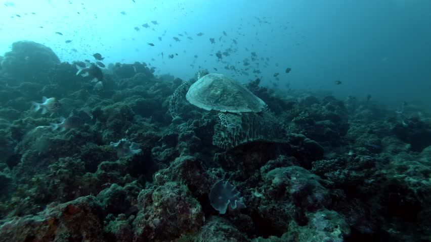 Sea turtle swim up over coral reef (Low-angle shot) #1009195433