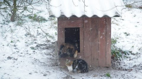 Dog in a kennel with cat sitting nearby in winter. It is snowing.