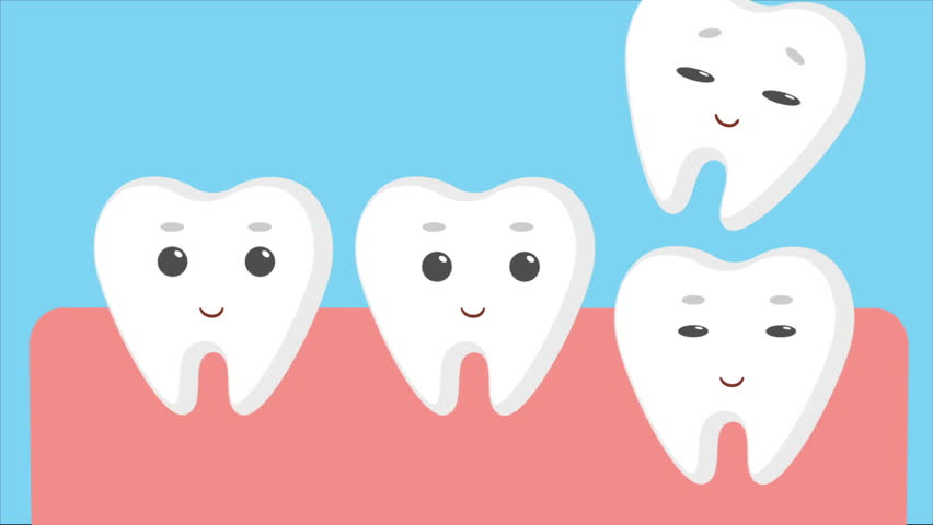 Cartoon gums with white baby teeth. Molar tooth growing instead of a milk tooth. Flat animation.