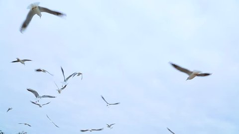 People feeding many hungry beautiful seagulls flying in cloudy sky. Slow motion hd video footage.