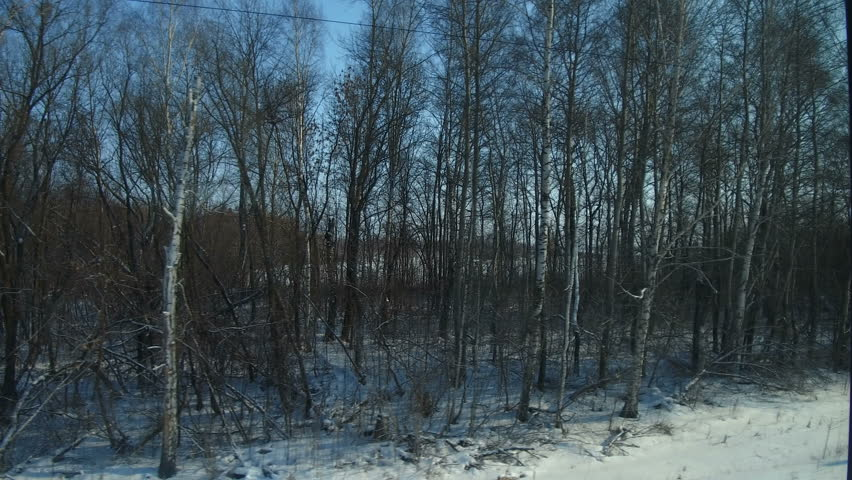 4K Point of view from the window of a passenger train. The deserted winter forest moves outside the window.