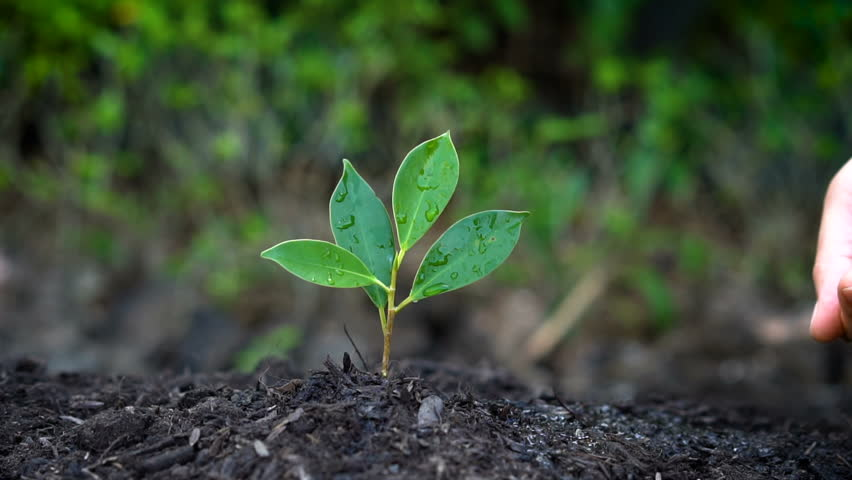 Slow motion shot of woman hand giving water to a plant sprout. Concept of green environment caring, global warming protection, tree plantation and agriculture. #1009688693