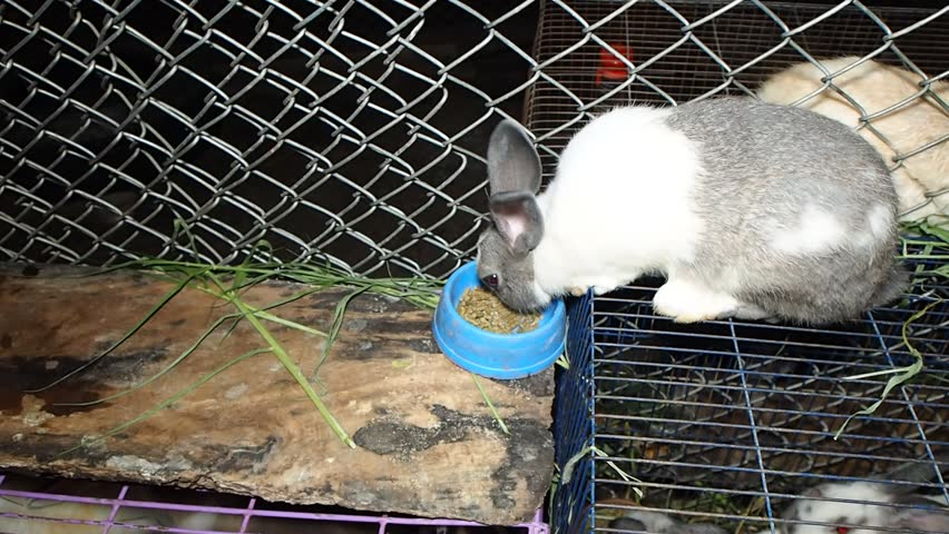 Vids adult rabbit food eats