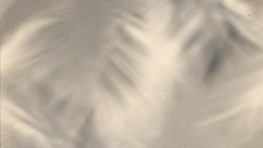 Tropical background of the shadows of palm tree fronds waving in the wind against a soft sand background