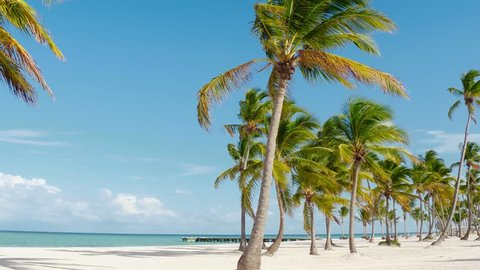 Tropical Beach and Palm trees of Bali. 4k, Island. White Sand, Beach, Caribbean Sea, Palm trees Chaise-Longue Caribbean, Punta Cana, Dominican Republic, 4k