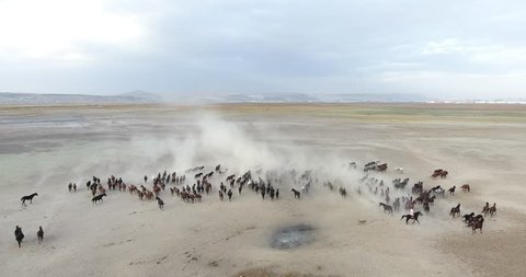 Aerial movie with herd of thoroughbred horses moving on the desert. wild horses Kayseri in Turkey, The concept of freedom, strength, independence and speed
