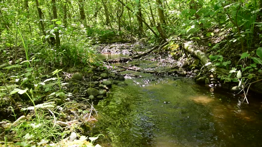 Spring brook with deposits of branches and flowing water in the protected floodplain forest Black river in the foothills of the Caucasus