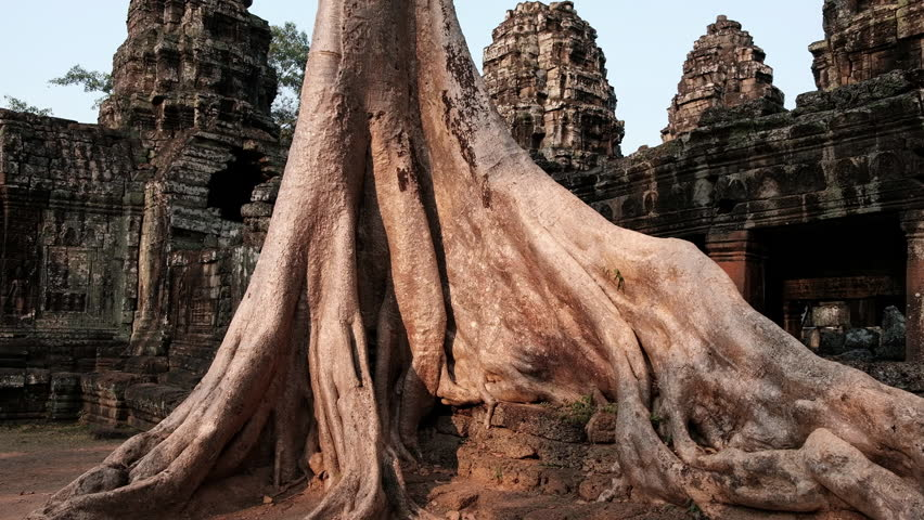 Huge tree roots, Cambodia, Angkor, Ta Prohm Temple
