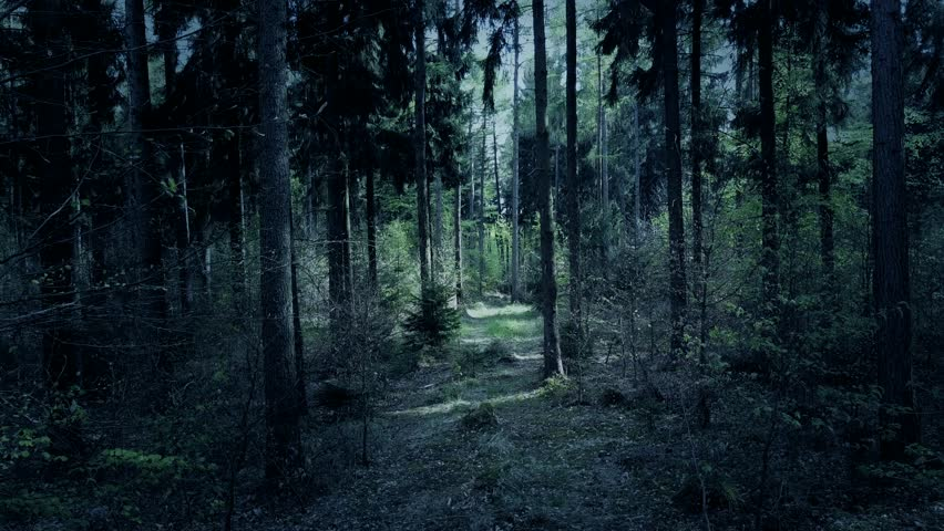 Drone shot aerial fx color graded fly through dark spooky eerie weird forest between trees 4k / Drone shot aerial fx color graded fly through dark spooky eerie weird forest between trees 4k | Shutterstock HD Video #1010696153