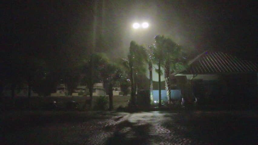 Hurricane Winds Whip Palm Trees
