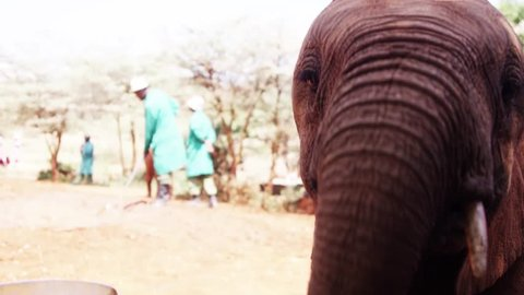 Playing Elephant in Kenya - Red Footage