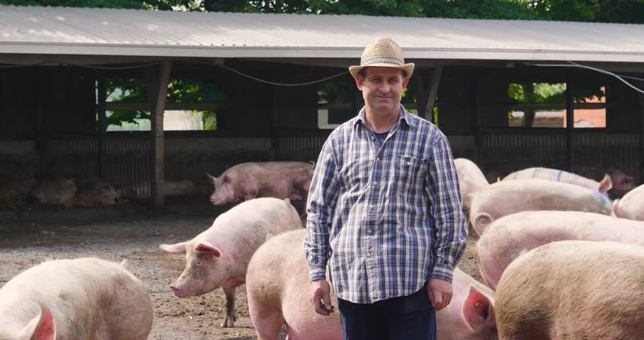 swine raising Swine raising: 1 phrase in 1 subject.