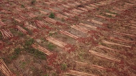 Aerial shot slowly rising up over a field of freshly harvested sugar cane