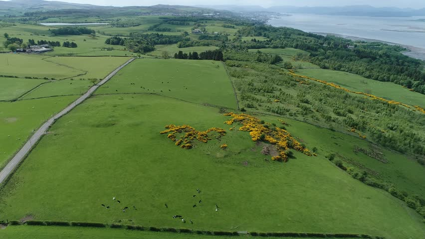 Aerial footage flying over yellow gorse covered hillside  towards the town of Greenock in the distance on the south shore of the Firth of Clyde.