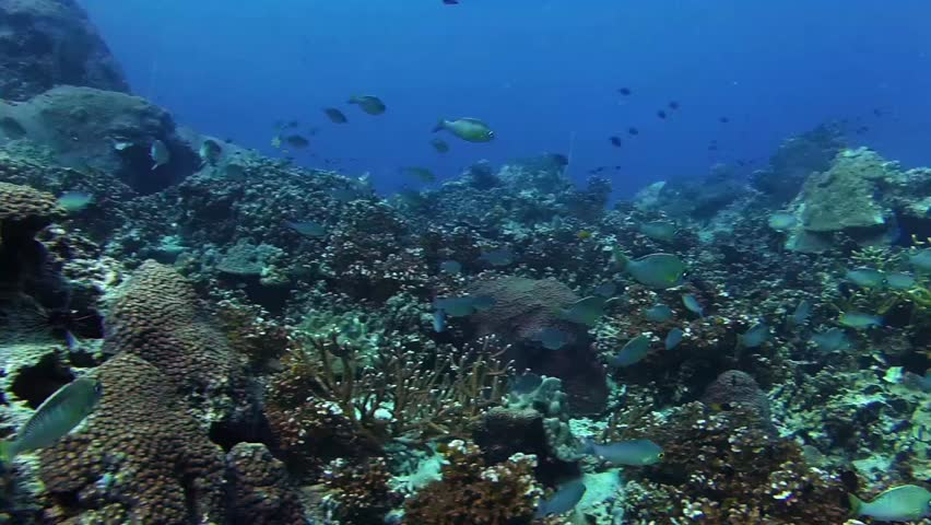 Swimming slowly over coral reef with various tropical fish and christmas tree worms near Koh Tao Thailand | Shutterstock HD Video #1011452693