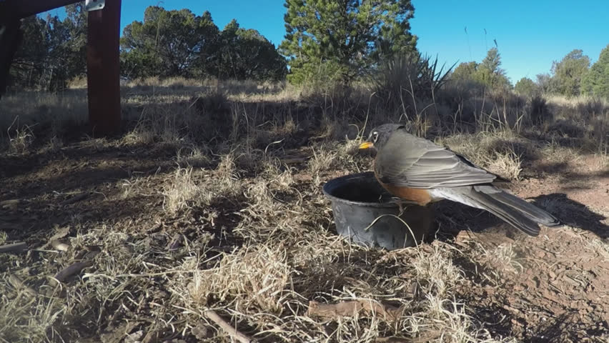 WILLIAMS, ARIZONA/USA- October 12, 2017: Birds fight near a small pot of water in a time of drought on the Arizona Coconino Plateau. | Shutterstock HD Video #1011493103