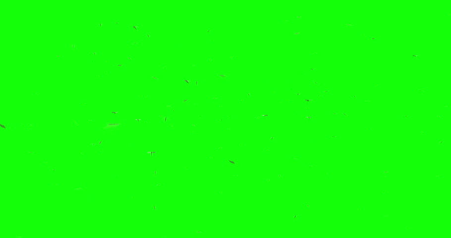 3D animation featuring a swarm of mosquitos flying around over a green background.