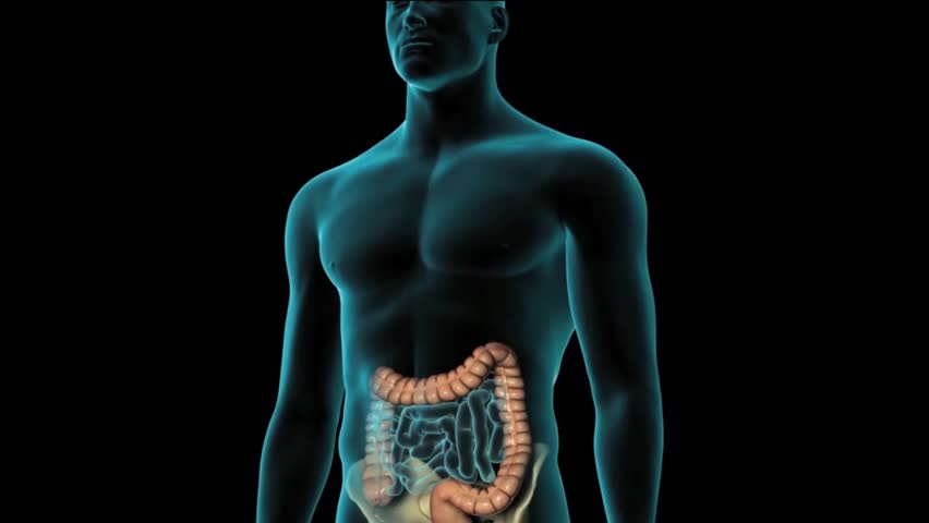 digestive system and appendicitis