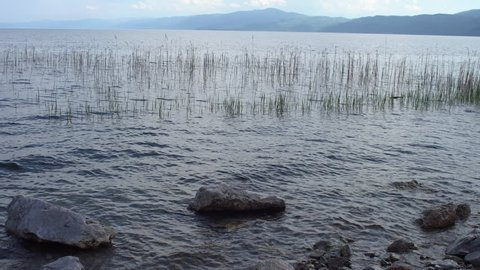 Crystal clear waters of Ohrid lake. Water plats, tall grass, rocks at the shore.