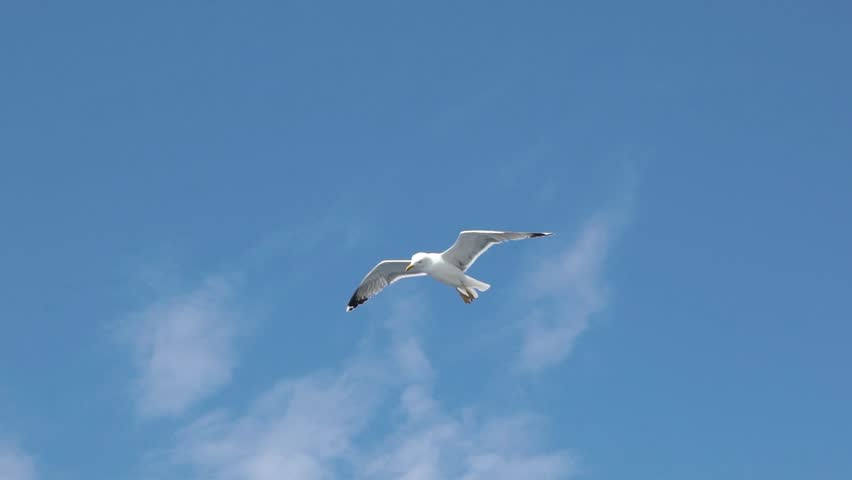 SLOW MOTION: Seagull in flight above sea surface. Gull flying and soaring above sea water on a sunny summer day. | Shutterstock HD Video #1011866243