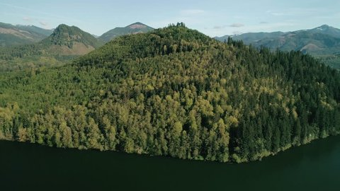 Thick Green Trees Forest Lake Aerial
