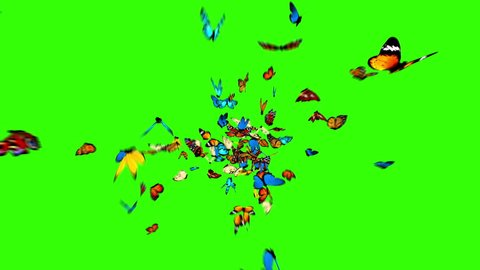 Butterflies Fly to the Camera on a Green Background. 3d animation, 4K