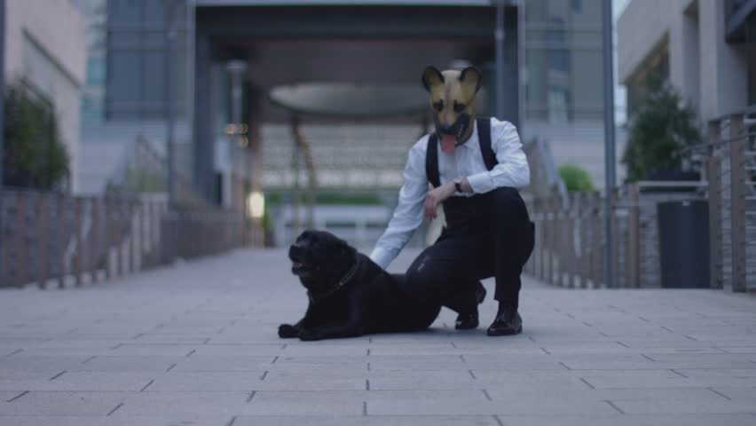 Petting Dog Wearing Dog Mask   Shutterstock HD Video #1012067573
